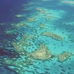 Cape Tribulation reef